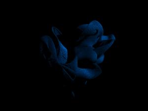 krakatoa15_basictutorial_1m_frame50_blue